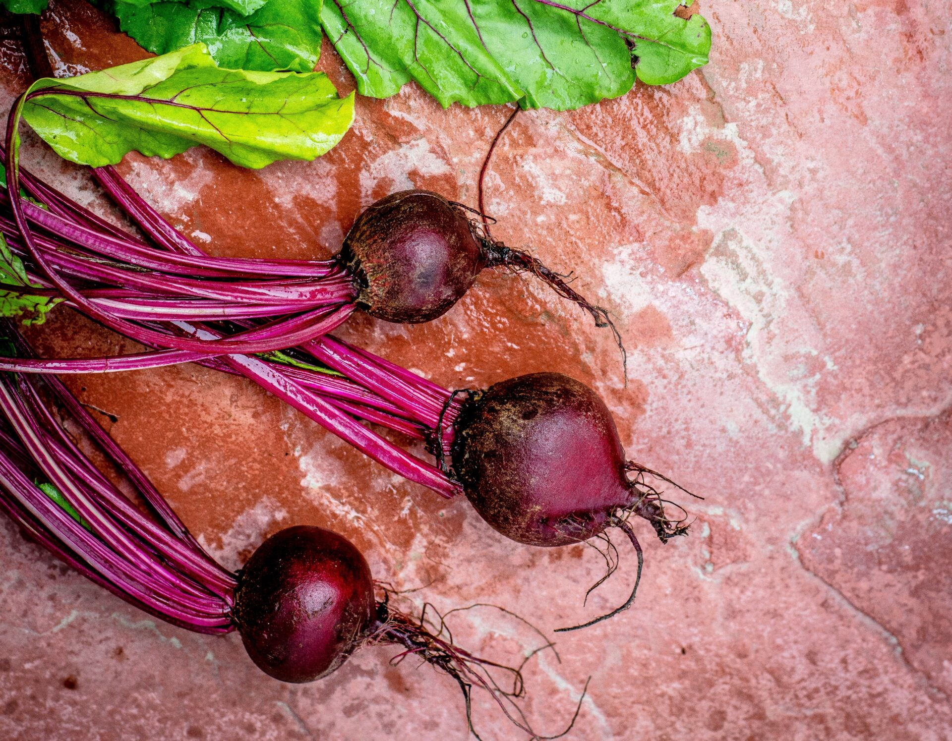 Beetroot on a bench