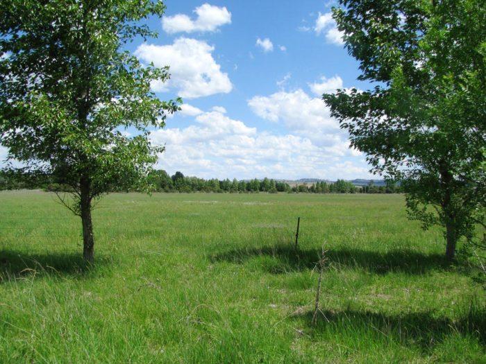 Chilcott Grass 3