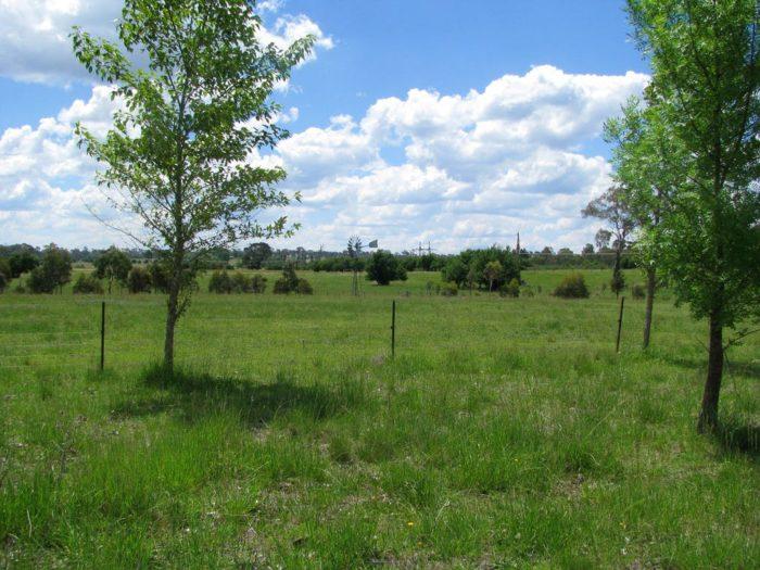 Chilcott Grass outdoors 2